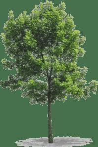 arbre cadeaux de noël engagés